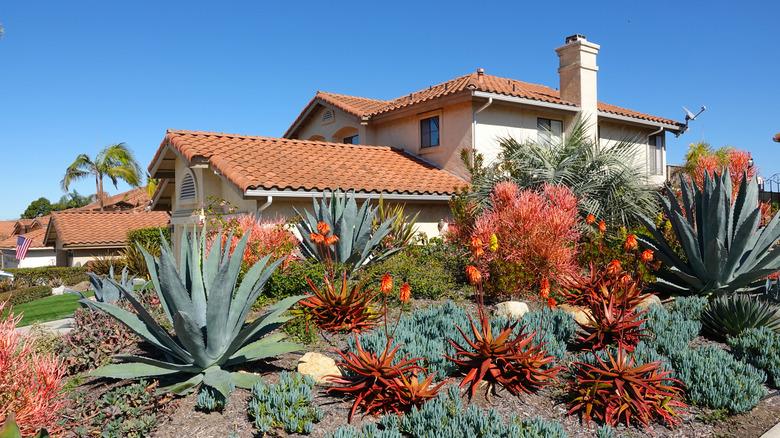 drought landscaped garden