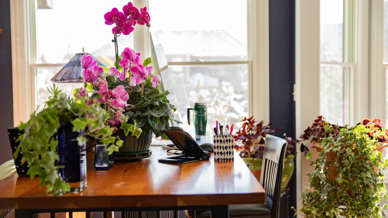 flowering houseplants in home office