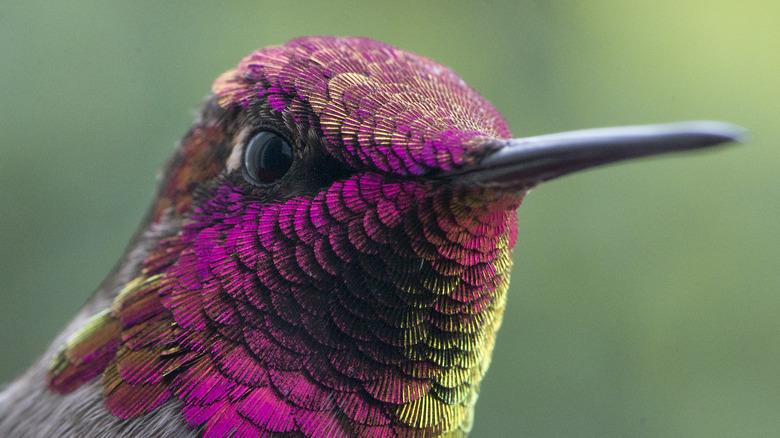 multi-colored hummingbird closeup