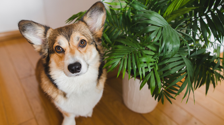 dog next to houseplant