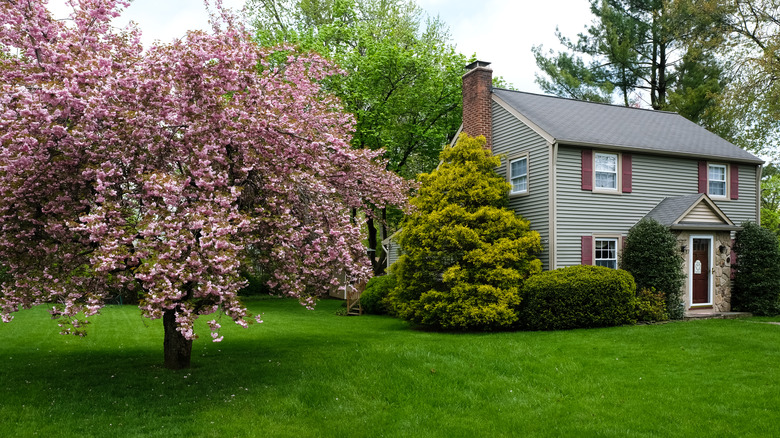 House with trees in yard
