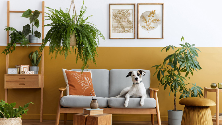 dog couch plants