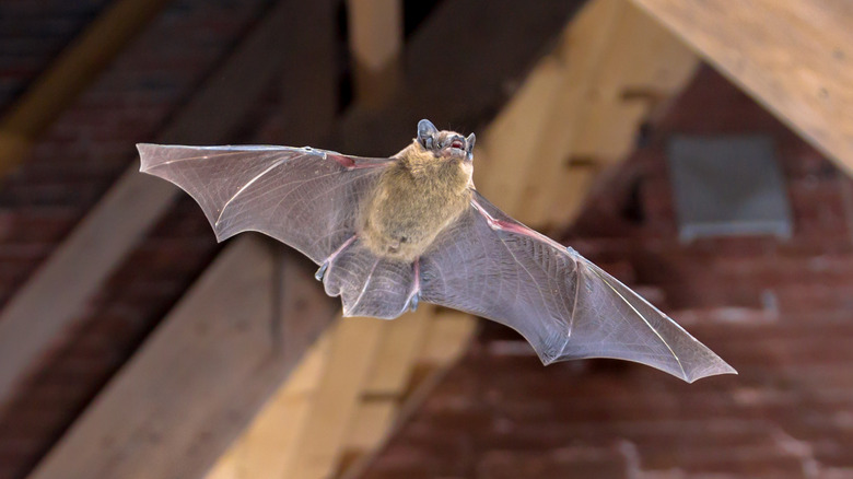 bat in an attic