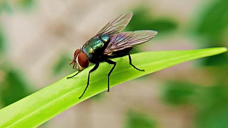 fly on leaf