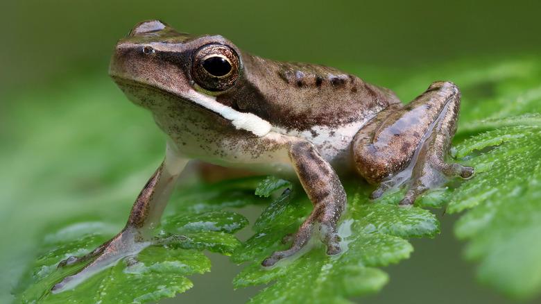 frog sitting on a fern leaf