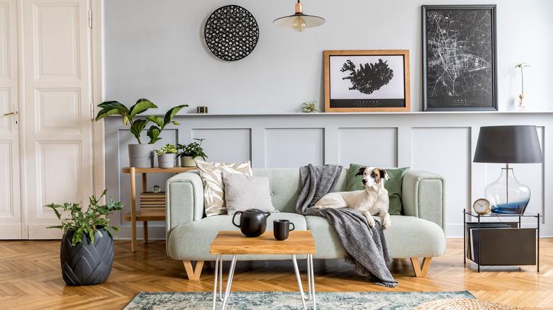 stylish living room with dog