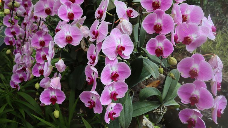 orchid garden plant