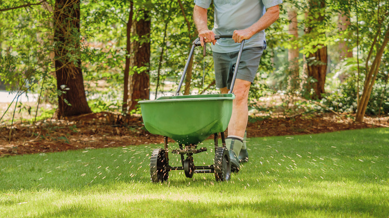 Person fertilizing lawn