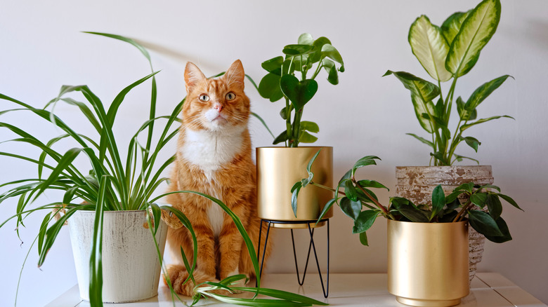 cat surrounded by plants