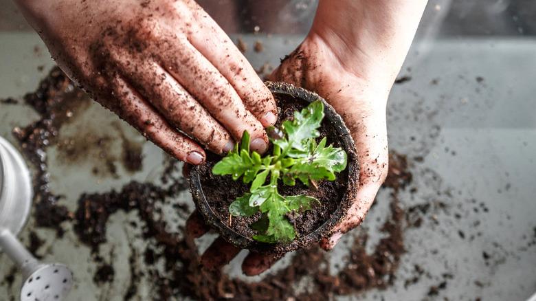 Person potting a plant