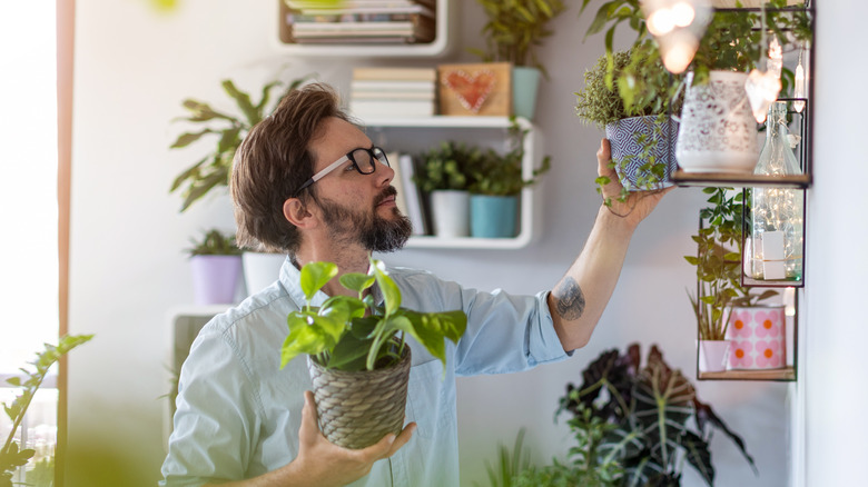 Man taking care of houseplants
