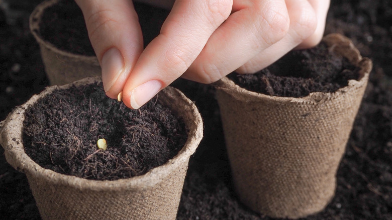 woman putting seeds in pot