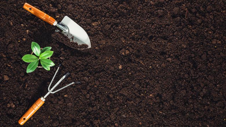 garden tools in soil