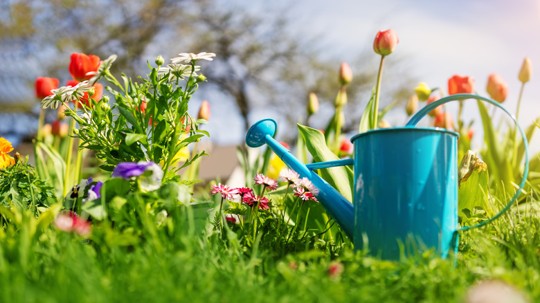 A watering can next to flowers